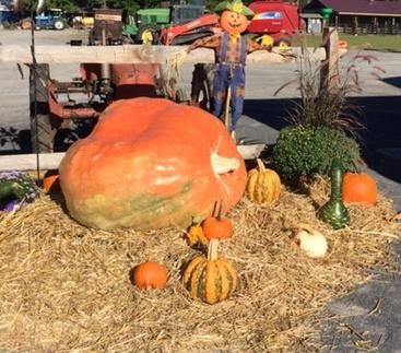 Kesicke Farm Fall Festival