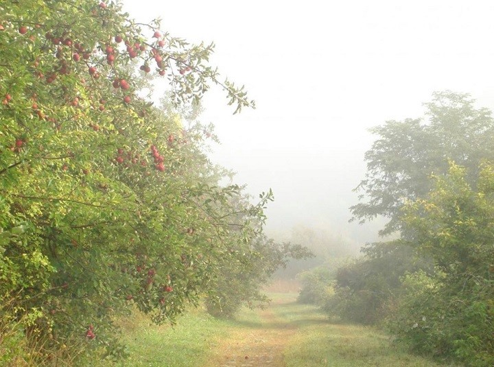 Hudson Valley Cider Ramble at Peach Hill Park Poughkeespie