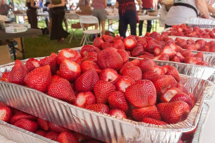 Beacon Sloop Club Strawberry Festival