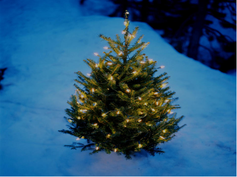 Town of Wappinger Tree Lighting