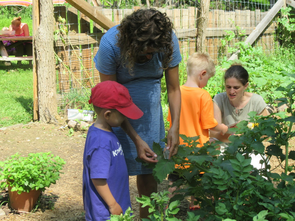 """Little Sprouts"" Preschoolers Explore the Teaching Garden at Clermont Historic Site"