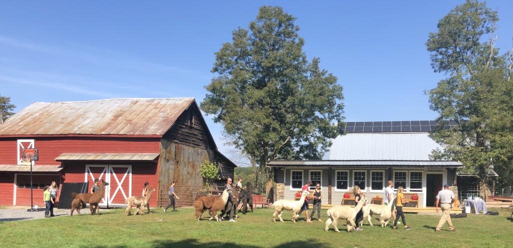 Clover Brooke Farm Sampling Experience