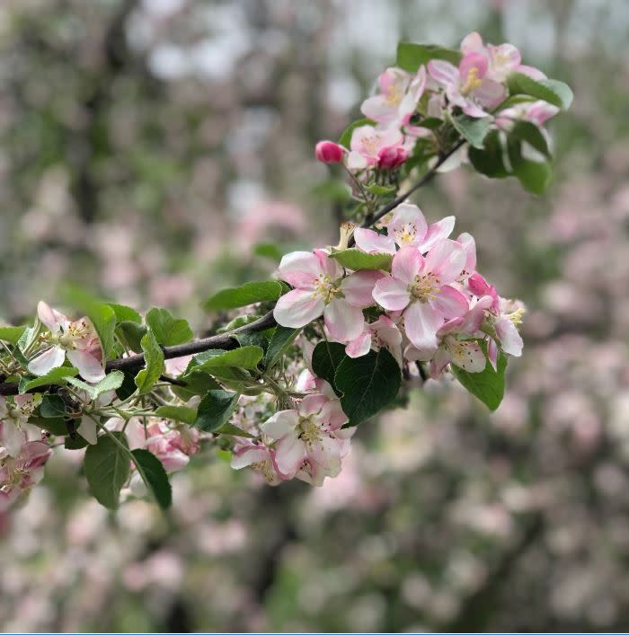 Montgomery Place Orchards Open House