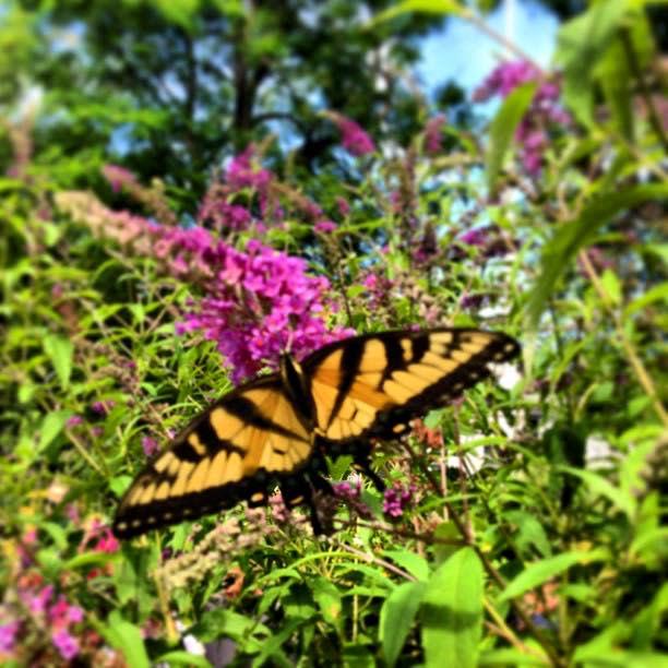 Butterfly Festival at Stony Kill