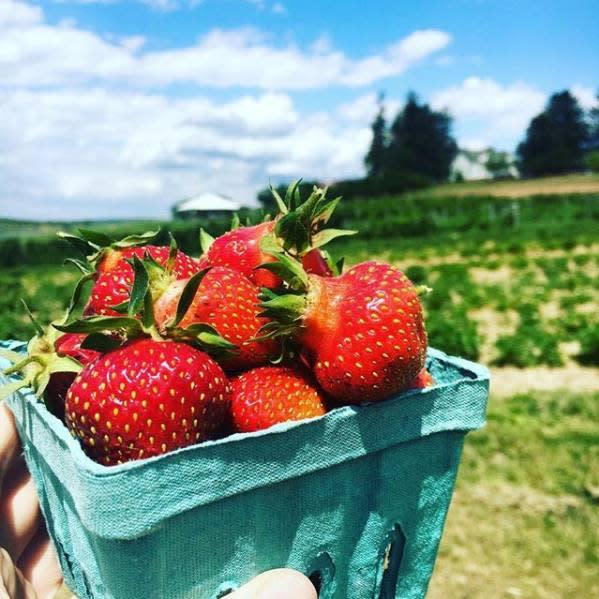 Strawberry Jammin
