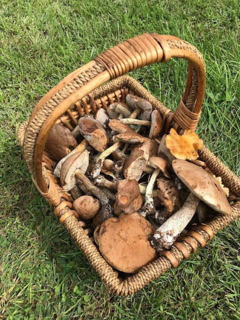 Fall Forage Mushroom Walk at Harlem Valley Homestead