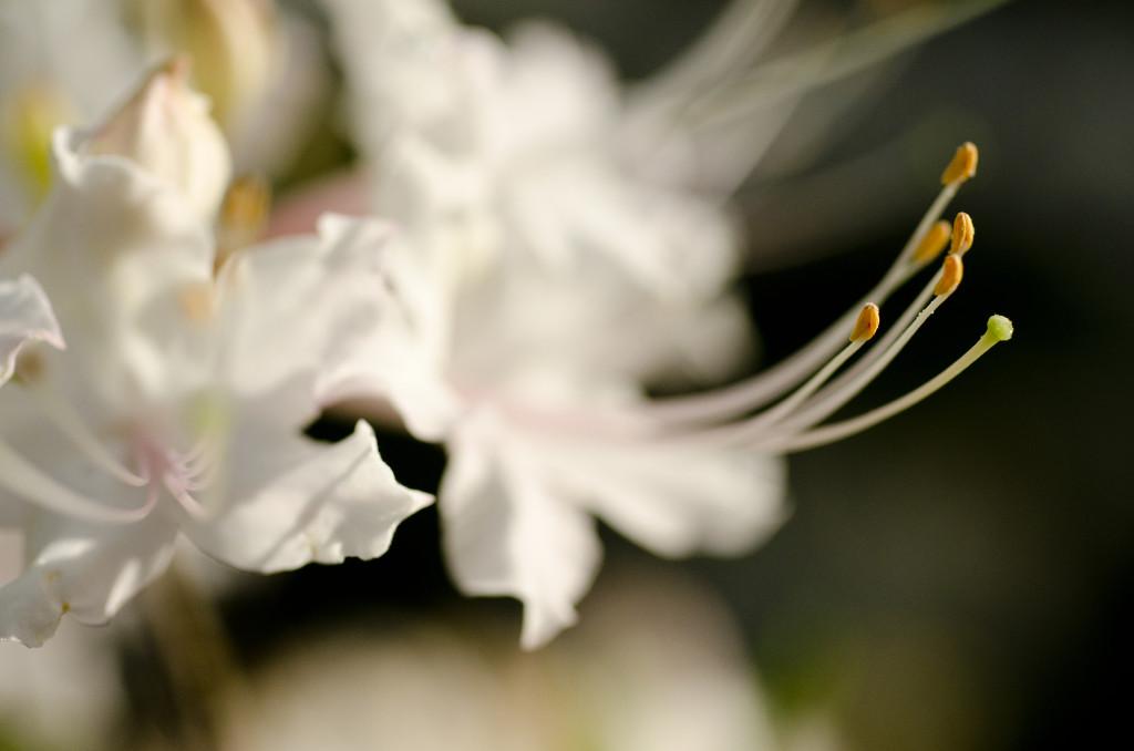 Griffin - Flower