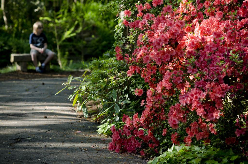 Brookwood - Flower Bush