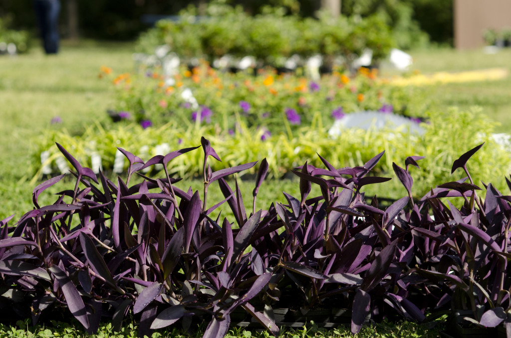 Hatcher Garden Public Botanical Garden & Woodland Preserve