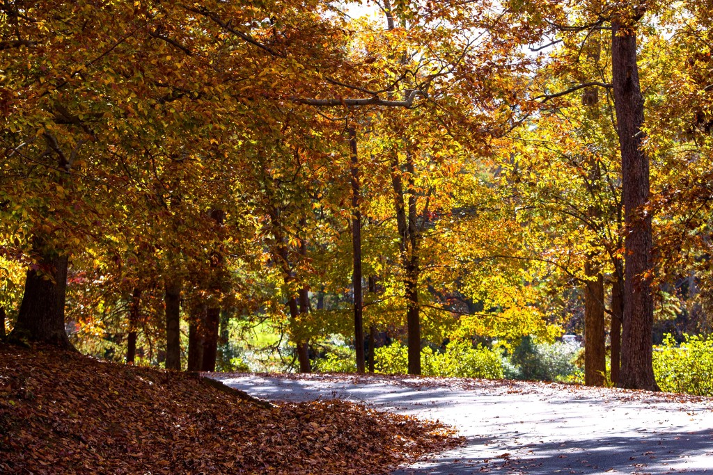 Duncan Park - Fall Leaves on Road